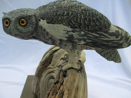 Eastern Screech Owl - Gray Phase; Title: Screech