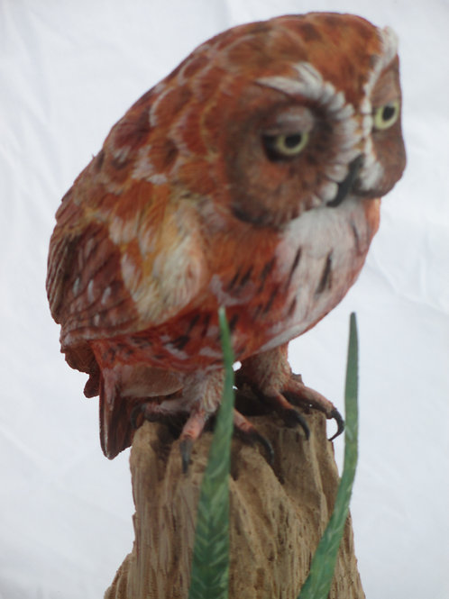 Eastern Screech Owl - Red Phase; Title: Sleepy