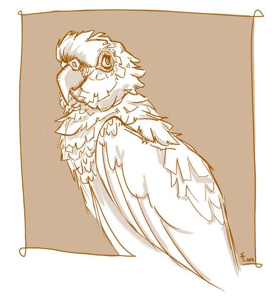 13_parrot.jpg