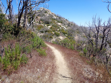 Day 19: Buckhorn Campground to Mill Creek Fire Station (26.3 miles)