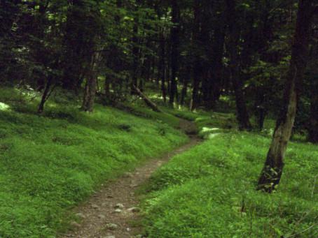 Day 45: Blackrock Hut to Bearfence Mountain Hut (33.8 miles)