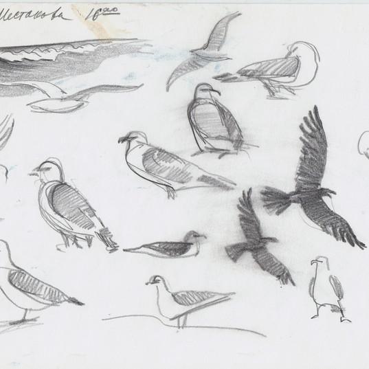 Парамушир, птицы