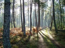 forêt_des_landes_girondines_edited