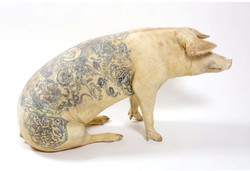 tatouage-cochon-02