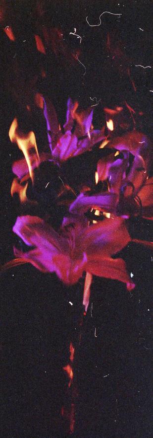 flower005-2.jpg