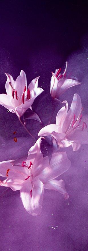 flower009-2.jpg