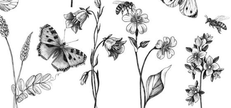 hand-drawn-wild-flowers-insects-butterfl