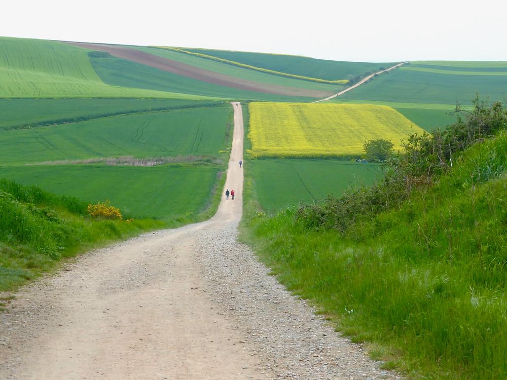 Camino Never ending road, green of Camino de Santiago