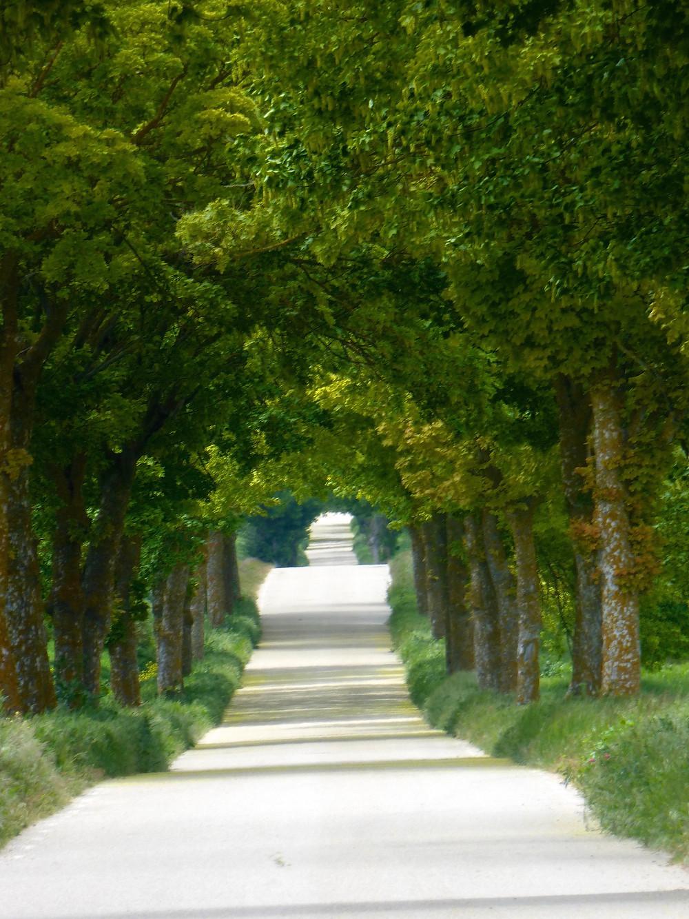 Camino Tree lined road