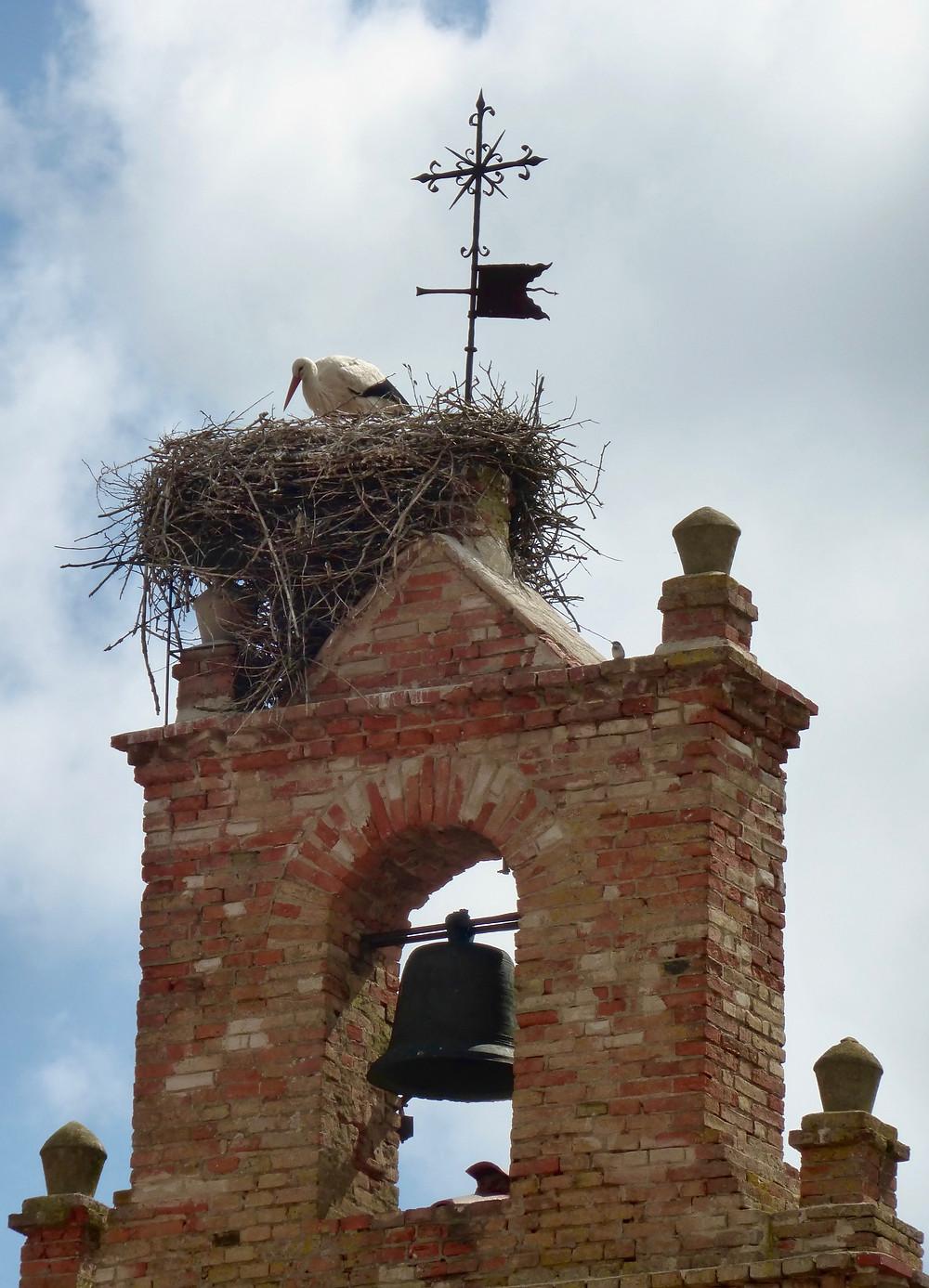 Stork nest, Spanish bell tower