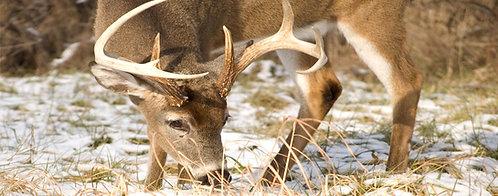 Whitetail Deer Buck Truck Tailgate Wrap