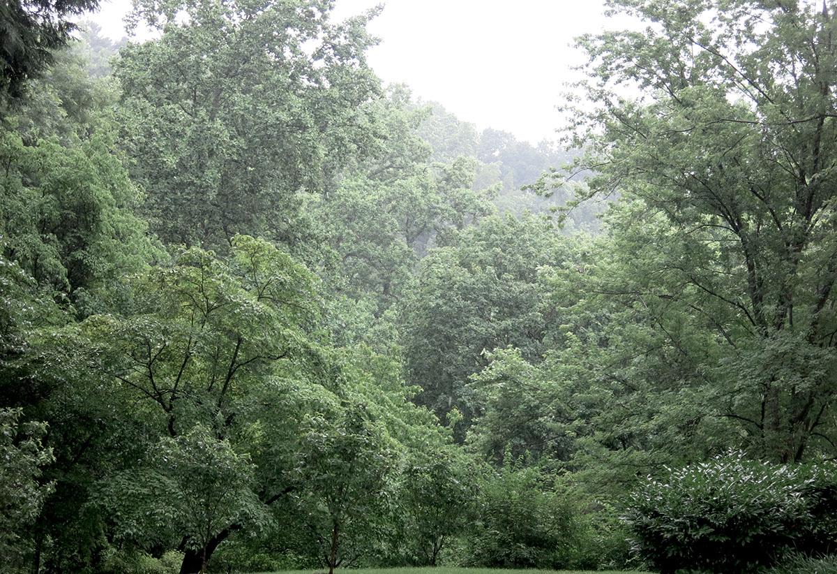 R Dumbarton Oaks 2