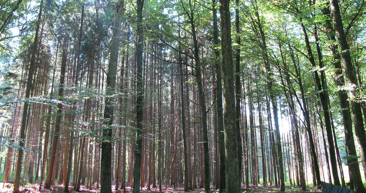 J_Göppingen_forest_4_