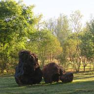 Stone Circle Willem Boshoff Nirox005.jpg
