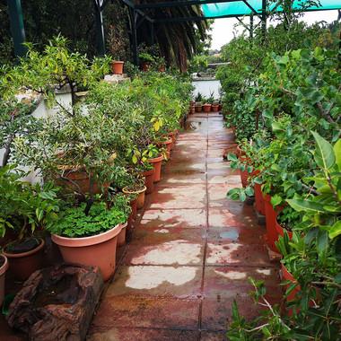 Garden of Words IV Willem Boshoff  Site
