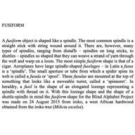 20-Fusiform-0-.jpg
