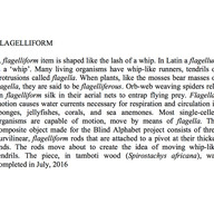 22-Flagelliform-0-1-.jpg