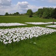 Garden of Words IiI Willem Boshoff  Fran