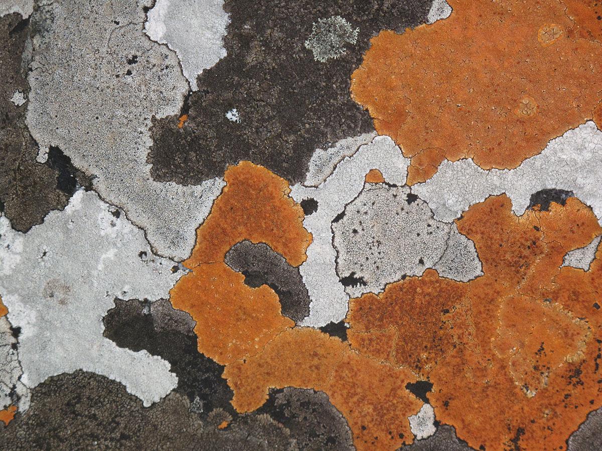 Lichen Rock (Mpumalanga 2) 1