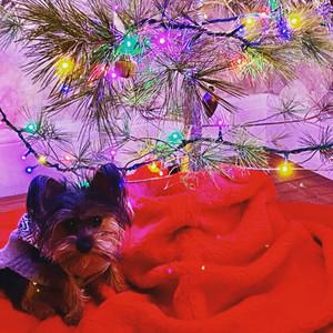 Matzo's First Christmaskah