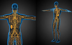 the-lymphatic-system-cbd-oil-and-detoxif