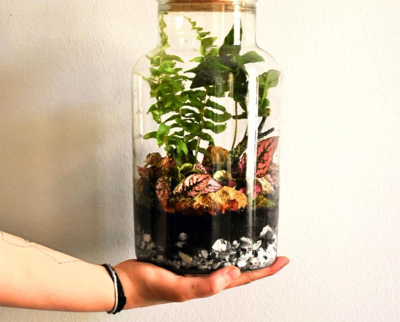 Een (mini) ecosysteem maken
