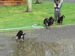 Buying A Puppy From Flood Farm