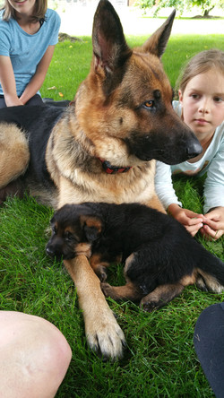 Lena and Pups