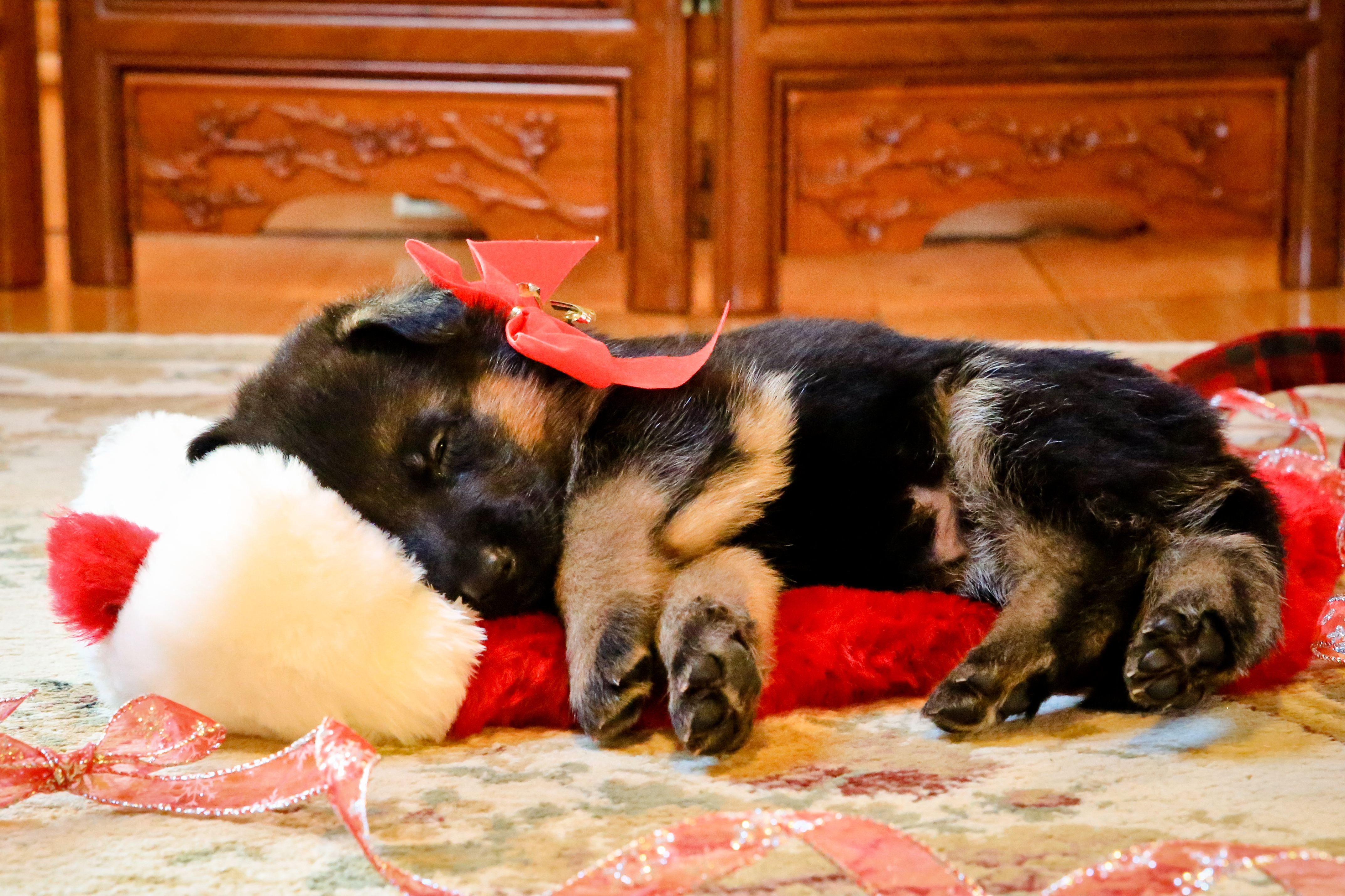 German Shepherd Pup Stocking