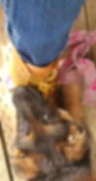 Silly German Shepherd Puppy