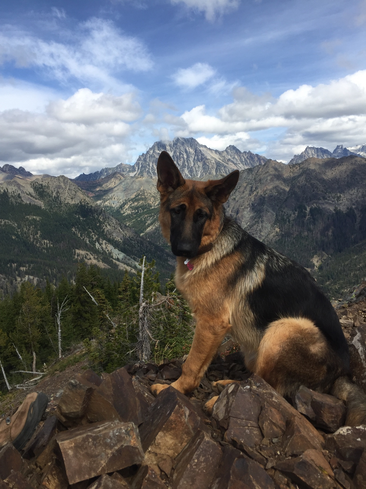 Zoe the Hiking Dog