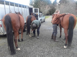 Prepping the horses