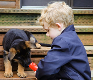 German Shepherd puppy and kid