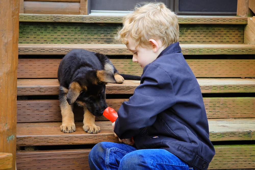 A boy tempts a pup closer with a squeaky toy.