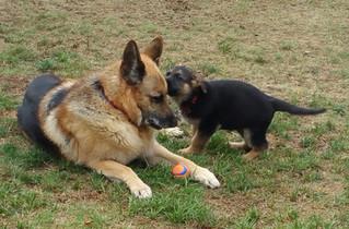 Puppy Teaches Old Dog New Tricks