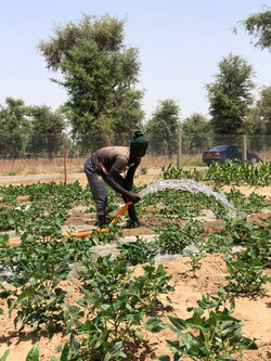 Champ d'agriculture innovante à Warba (Cameroun)
