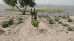 Deux bénéficiaires sur le site d'arboriculture de Matafo (Tchad) © ACF