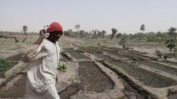 Un cultivateur dans le site d'arboriculture de Ngarangou (Tchad)