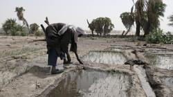 Activité maraîchère dans le site d'arboriculture de Ngarangou (Tchad)