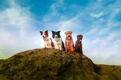 Clyde, Daisy, Barney, Boo