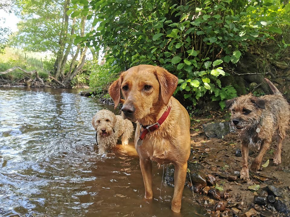 taggie, murphy, eddie in the water