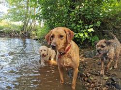 taggie, murphy, eddie in the water