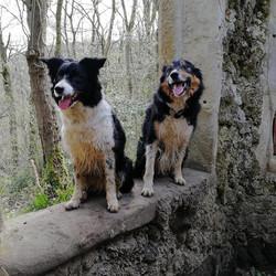 Daisy and Ollie