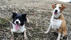 daisy and tia