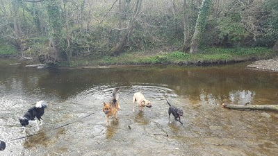 the pooches in the water