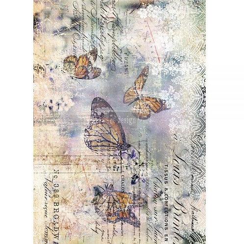 Monarch Grace  -Prima Transfer