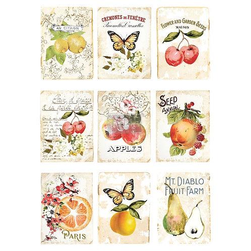 Sweet Apricot  -Prima Transfer