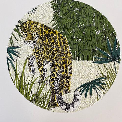 Looking Back Leopard