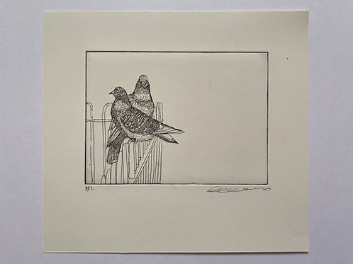 Friendly pigeons, etching