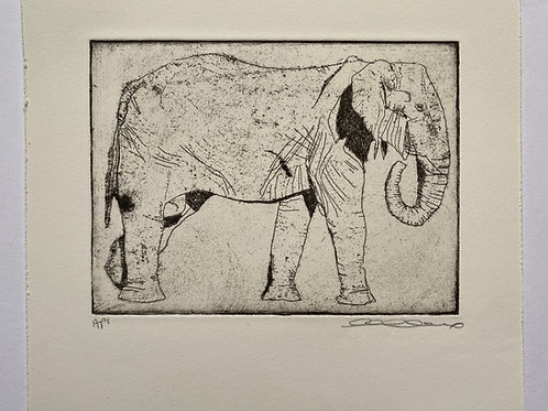 Elephant, etching